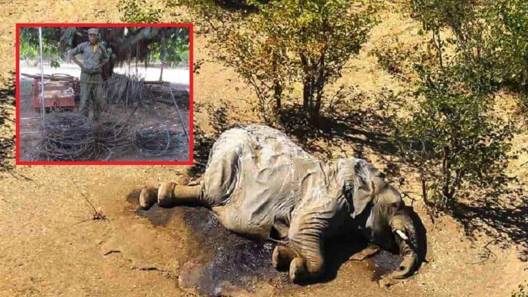 Uno de los elefantes aparecidos muertos en Botsuana. / National Geographic