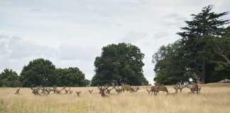 emergencia cinegetica ciervos guadalajara