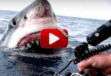 encontronazos-tiburones