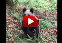 encuentro-oso-cazador