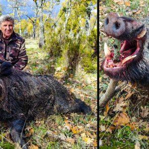 Van de caza menor en Salamanca y se arranca este descomunal jabalí de 140 kilos