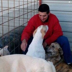 Envenenan a los perros de un rehalero y mueren casi todos