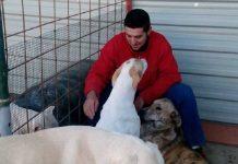 envenenan perros de un rehalero
