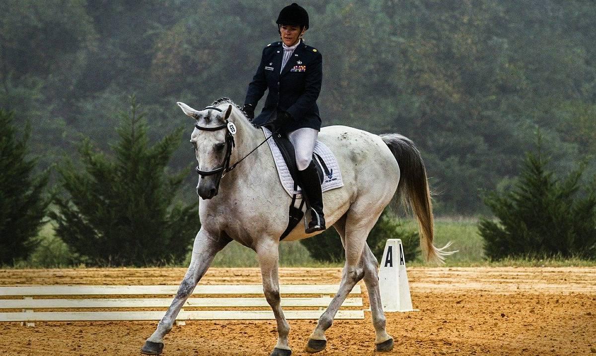 La equitación y el caballo concurrirán a Caza y Campo – Madrid