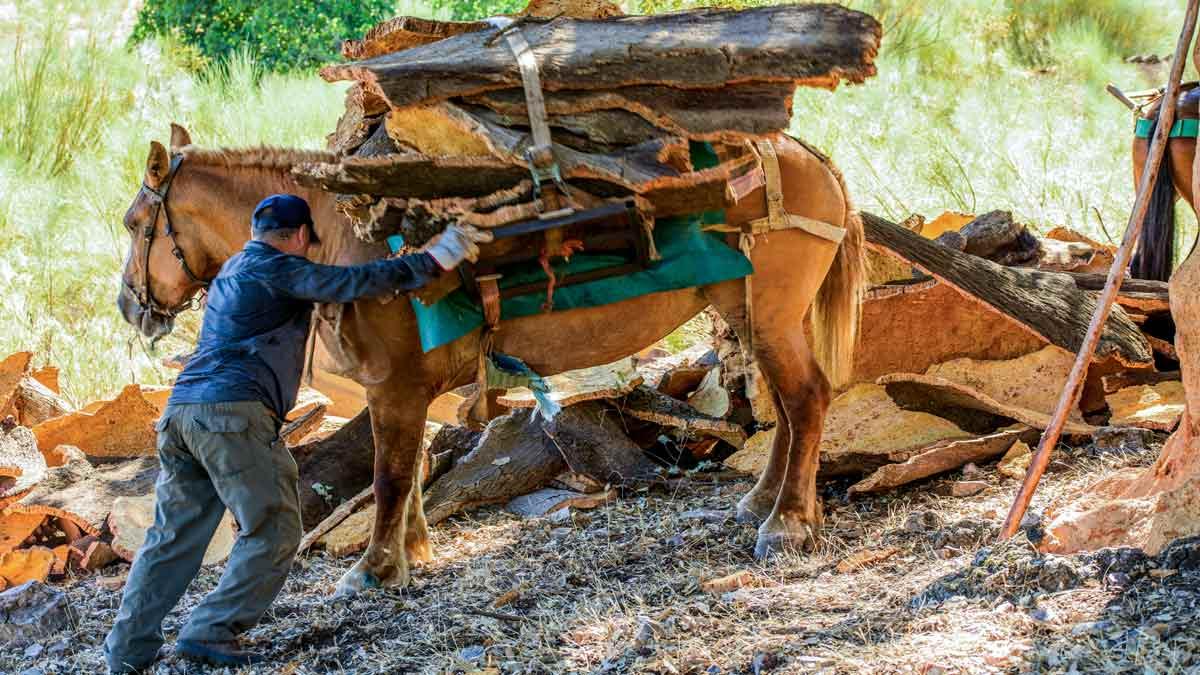 El mundo rural presenta un plan de activación del sector de la caza en Extremadura