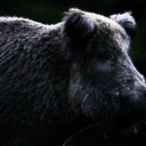 Siete productos de Solognac para cazar jabalíes que triunfan en la web de Decathlon
