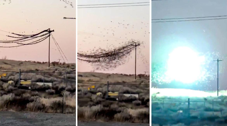 Impresionante vídeo: miles de estorninos caen fulminados por una descarga eléctrica en unos cables de alta tensión