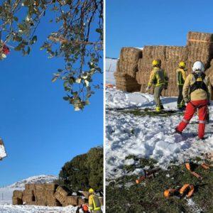 Un ganadero tiene que usar un helicóptero para alimentar a sus toros bravos en la nieve