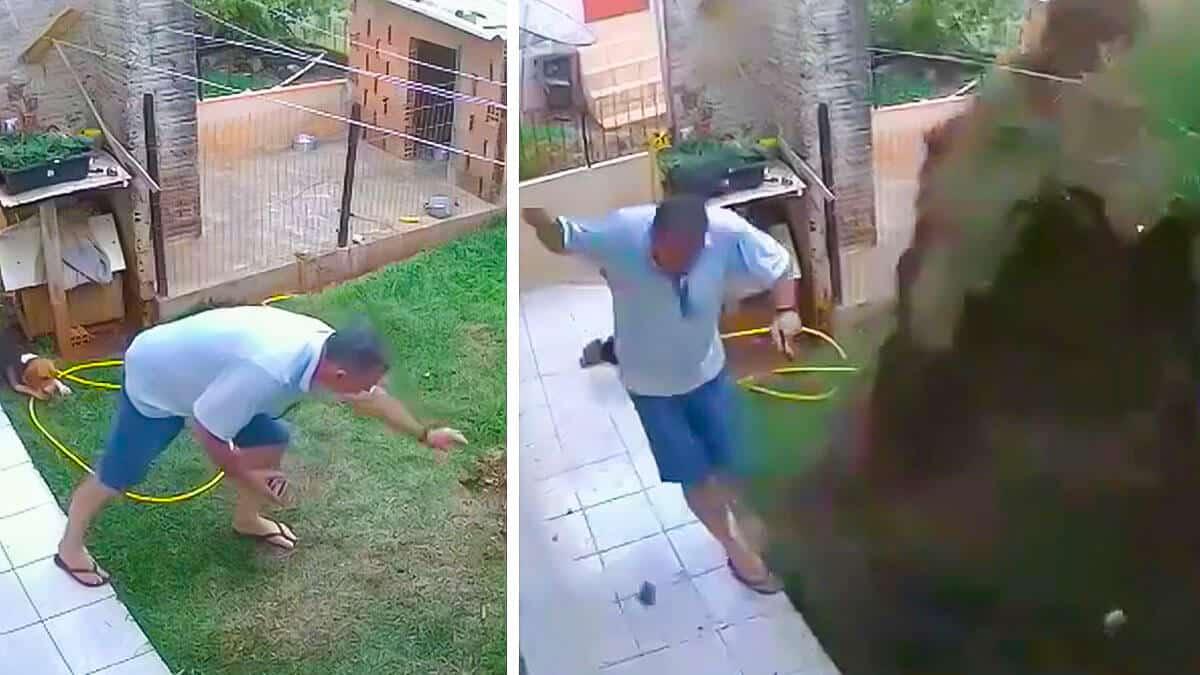 Provoca una gran explosión al intentar acabar con los topos de su jardín ante la mirada de sus perros de caza