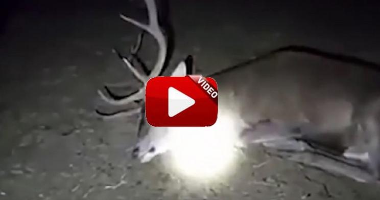 El extraño vídeo de un ciervo aparentemente muerto