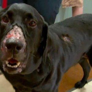 'Alabama Rot', la enfermedad que mata a 9 de cada 10 perros infectados
