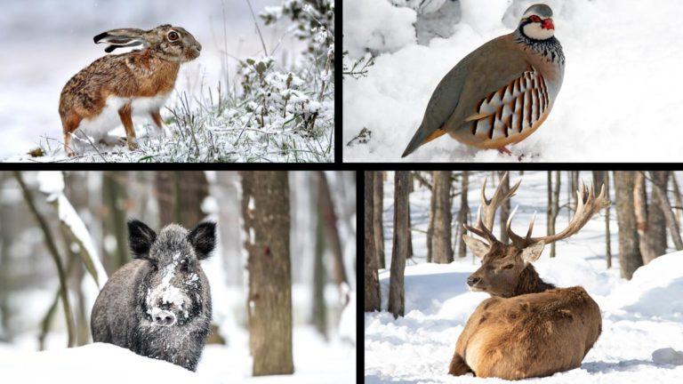fauna-cinegetica-nieve