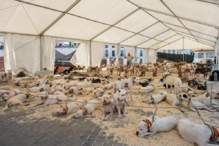 Un pueblo de Málaga se pliega ante los animalistas y prohíbe una feria de perros