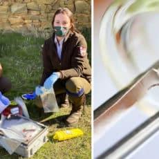 Cazadores salmantinos colaboran con el IREC en la lucha contra el virus de la fiebre de Crimea-Congo