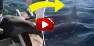 foca huye de orcas.