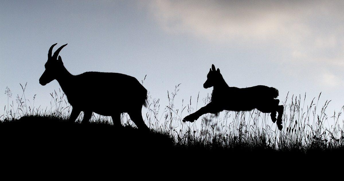 La mayor exposición de fotografía sobre naturaleza llega a Madrid