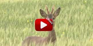 fundacion-artemisan-video-presentacion