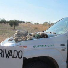 De película: tiran los conejos por la ventanilla del coche mientras guardas de caza, Seprona y Policía los persiguen