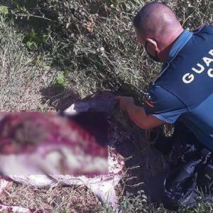 Detenidos tras matar sin permiso una cierva para llevarse su carne a casa