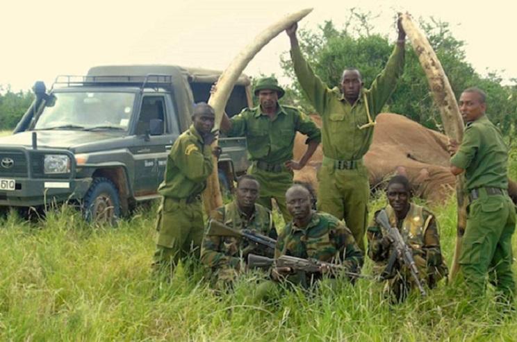 Los agentes tuvieron que extraer los colmillos para evitar que los furtivos volviesen hasta el animal. / Tsavo Trust