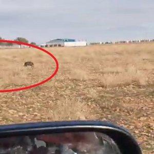 Varios furtivos se graban corriendo liebres desde el coche y el vídeo indigna a los cazadores