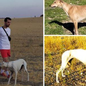 Otro galguero destrozado por el robo de dos perras que ya no podían cazar
