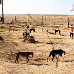 Febrero: el mes de las mentiras animalistas sobre los galgos