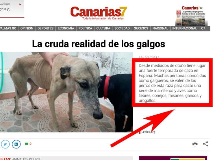 «Los galgueros cazan urogallos y gansos con sus perros en España», la última noticia falsa sobre caza