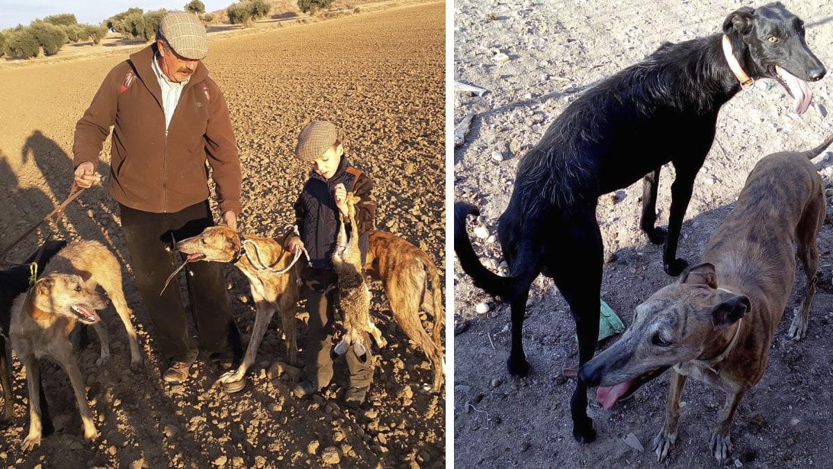 Roban seis galgos a un cazador toledano y la Guardia Civil intercepta tres en una furgoneta camino a Badajoz