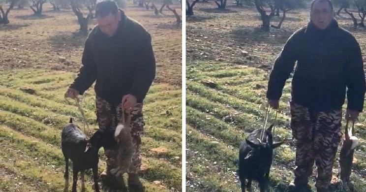 Este es el desternillante vídeo de un galguero que 'caza' liebres con una cabra