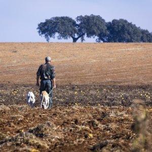 El perro y el hombre cazan juntos desde hace más de 11.000 años