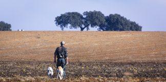 galguero el perro y el hombre cazabn juntos desde hace 11000 años