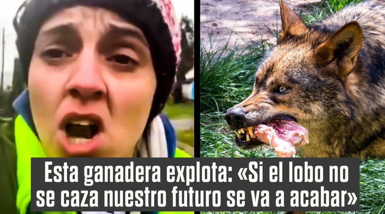 Llamada de auxilio de una joven ganadera: «La caza del lobo es muy necesaria»