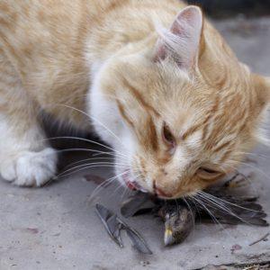 El Covid también estaba entre los gatos callejeros que el Gobierno permitió alimentar en el confinamiento
