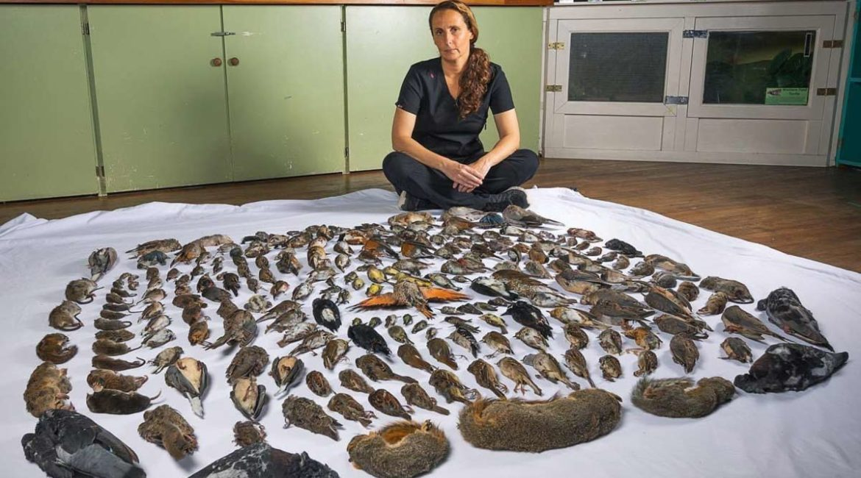 Todos estos animales han sido cazados por gatos domésticos durante un año