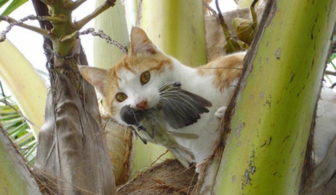 El Ayto. de Málaga formará a personas para que alimenten a gatos