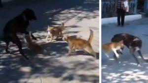 Cuatro gatos acorralan a un perro y esta es su reacción