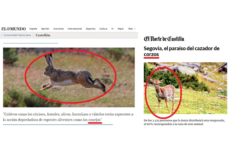Cinco 'gazapos' antológicos sobre fauna de los grandes medios españoles