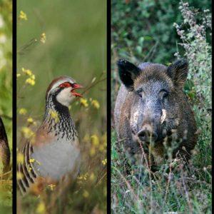 10 falsos mitos sobre gestión de perdiz, conejo, corzo o jabalí en cotos de caza