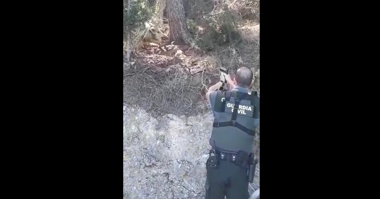 graban a un Guardia Civil disparando a un jabalí