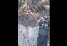 graban a un Guardia Civil disparando a un jabalí