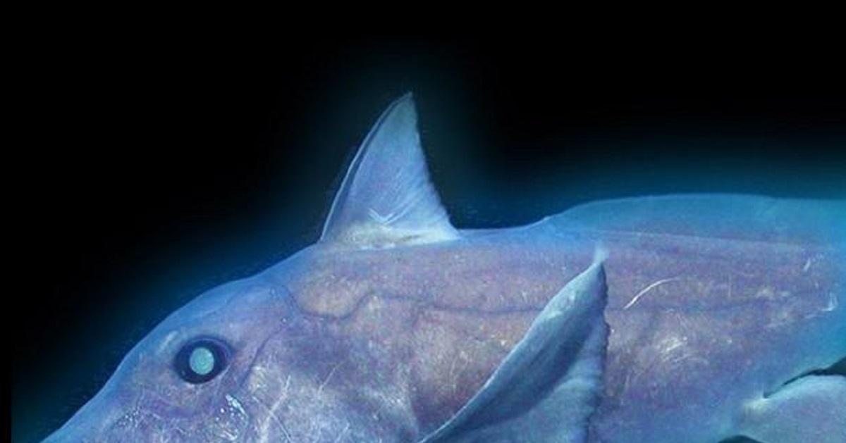 graban-por-primera-vez-tiburon-fantasma