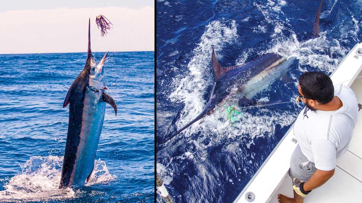 Gran Canaria, la meca europea de la pesca deportiva de altura