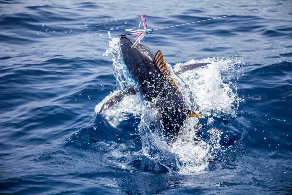 Un emocionante lance con un blue marlin.