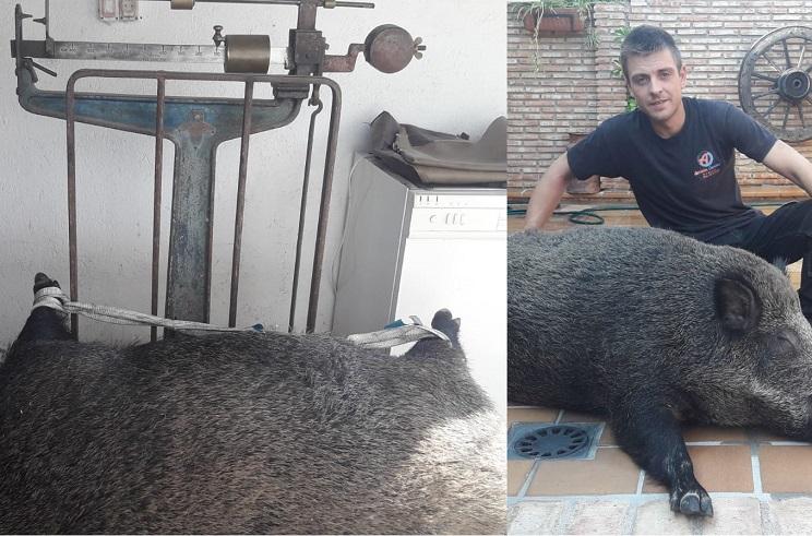 Cazan en Madrid un gran jabalí de casi 150 kilos
