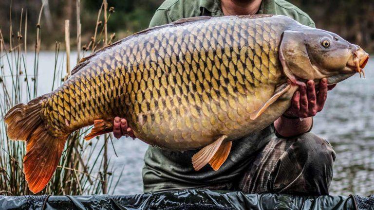 Una pescador con una gran carpa. ©Shutterstock