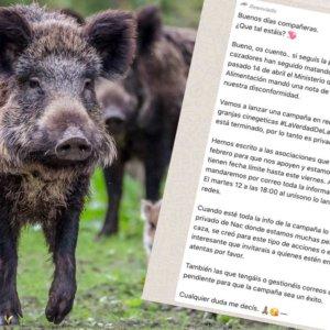 Destapamos la campaña 'secreta' con la que los animalistas atacarán a la caza