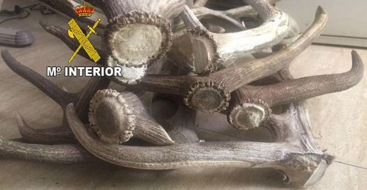 guardia civil detiene banda robaba trofeos de caza