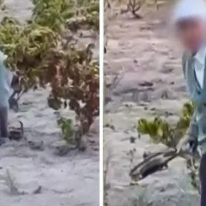 Monta un cepo para conejos en una viña mientras la Guardia Civil graba la escena