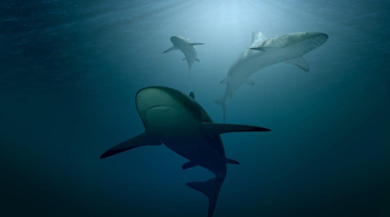 Pescan un monstruoso tiburón de 231 kilos y dos metros y medio de largo